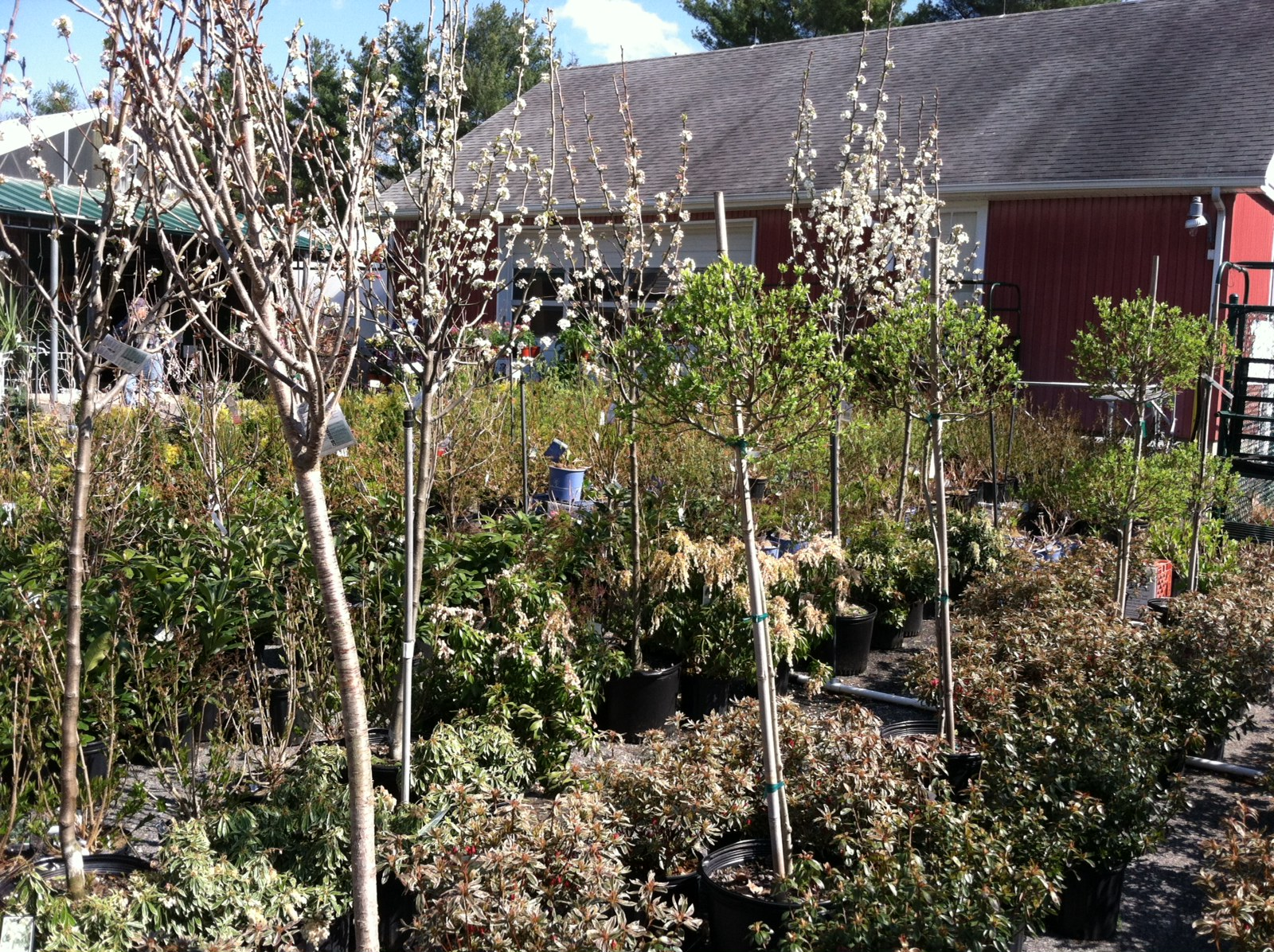 Plenty of perennial shrubs to choose from