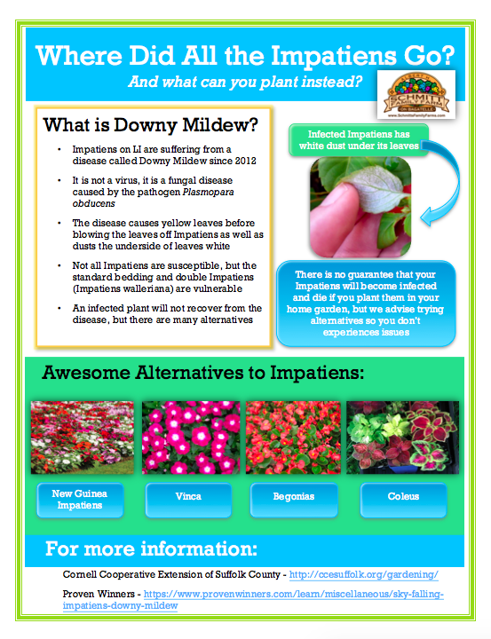 Impatiens Fact Sheet Image