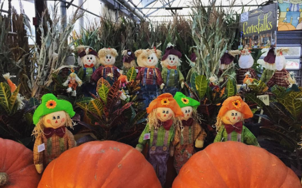 Hay bales, Cornstalks, and other Fall Decor